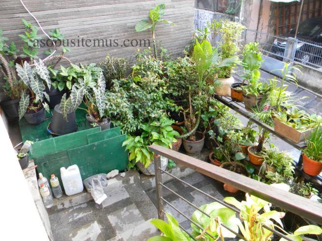 halaman teras depan menyiram tanaman