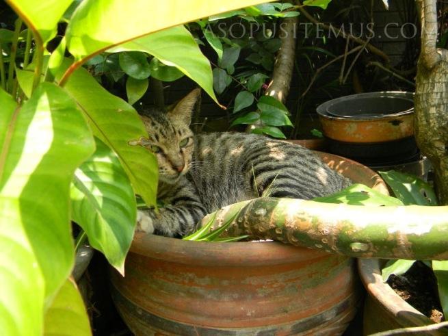 Kucing bersembunyi di balik tanaman