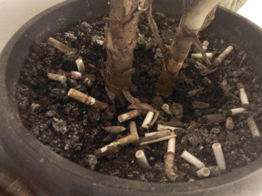 Kebiadaban perokok, membuang puntung rokok ke pot tanaman.